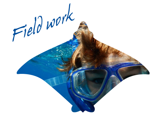 Learn more on field work
